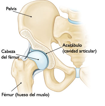 Franco Equipos MédicosArticulación de Cadera -